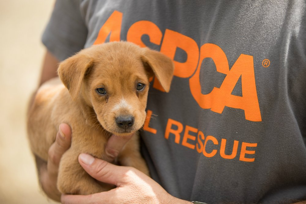 Aspca's Free And Low-cost SpayNeuter Database