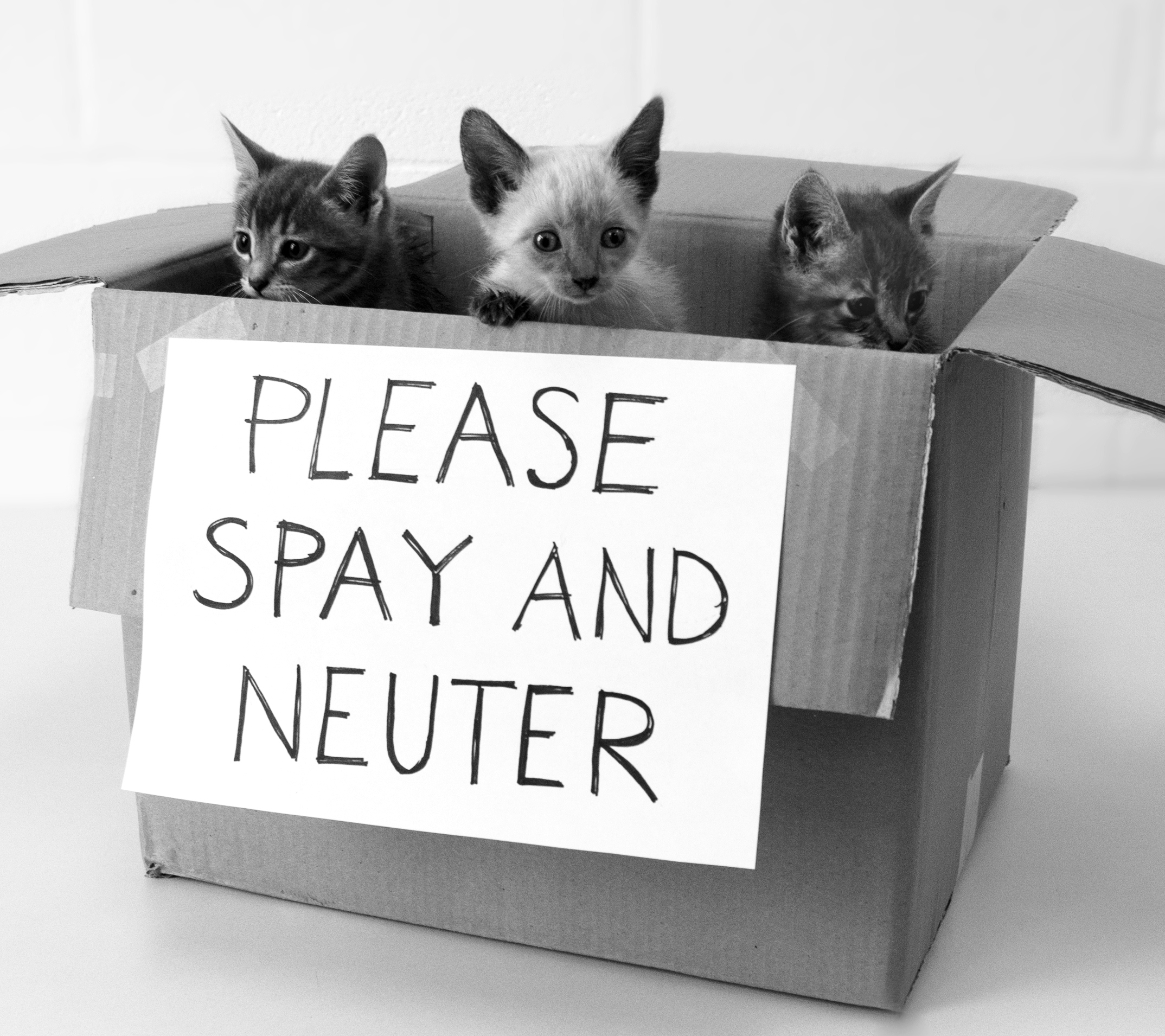 Where Can I Get My Cat Neutered For Free? Click To Know